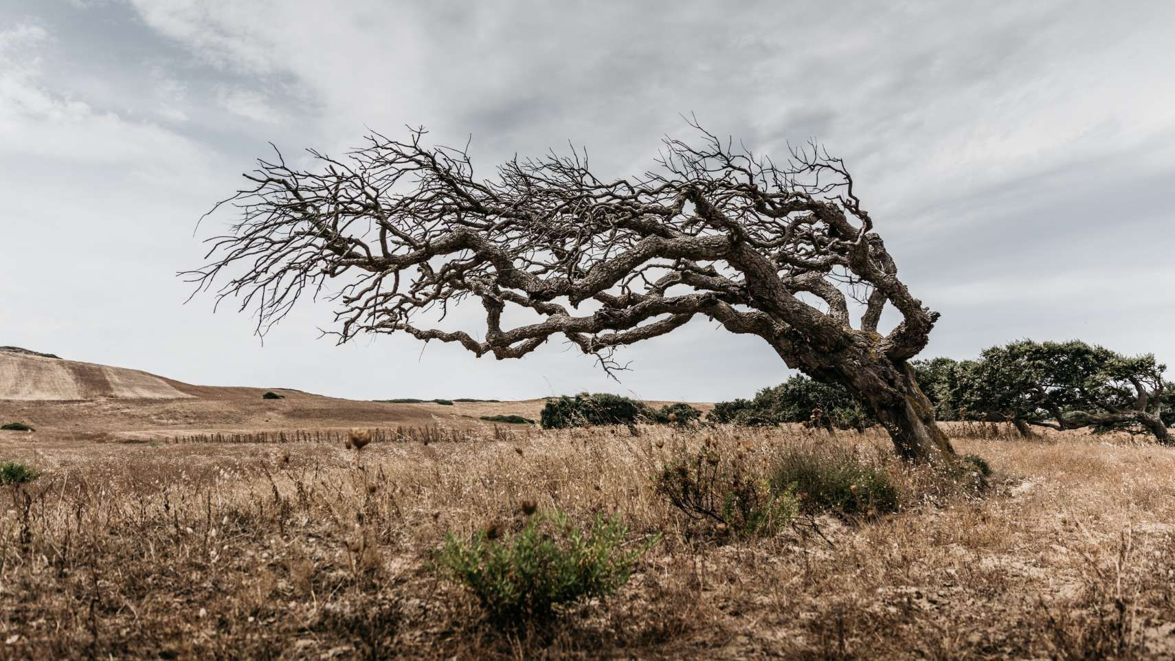 Mistral shaped trees like this one are found all over Sardinia, just like the remnants of a long-gone civilisation